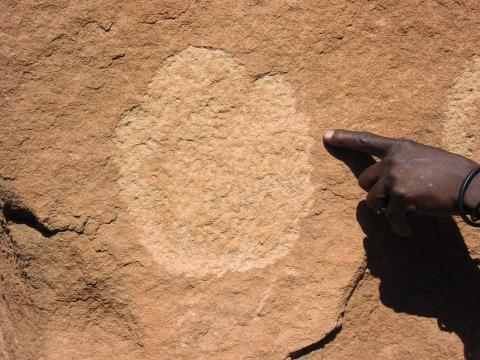 Engraved rhino spoor
