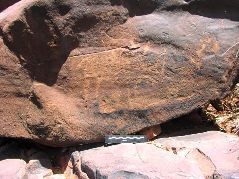 Engraved rhino