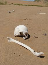 Human remains exposed by wind erosion