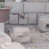 Agama planiceps planiceps | Namibian Agama