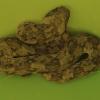 Bitis caudalis | Horned Adder